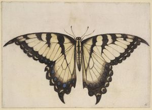 Butterfly Eastern Tiger Swallowtail Ncpedia Butterfly Art Print Butterfly Poster Swallowtail Butterfly