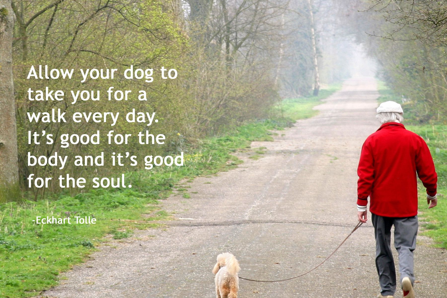 Allow Your Dog To Take You For A Walk Every Day It S Good For The Body And It S Good For The Soul Eckhart Tolle Dog Quotes Your Dog Dogs