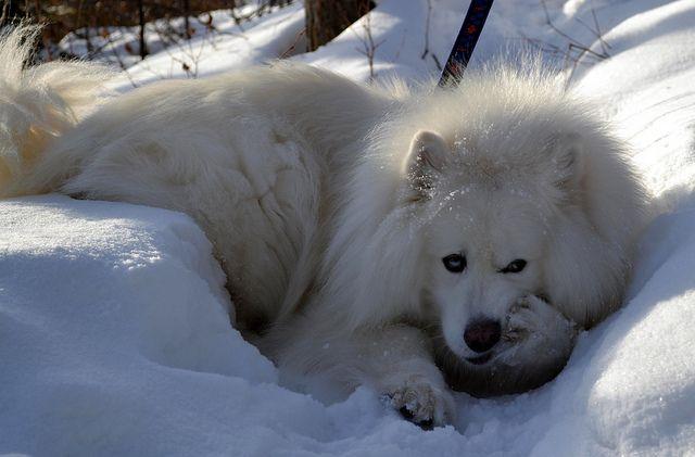 Ottawa Ontario Canada March 2011 Winter Scenes 50 Winter