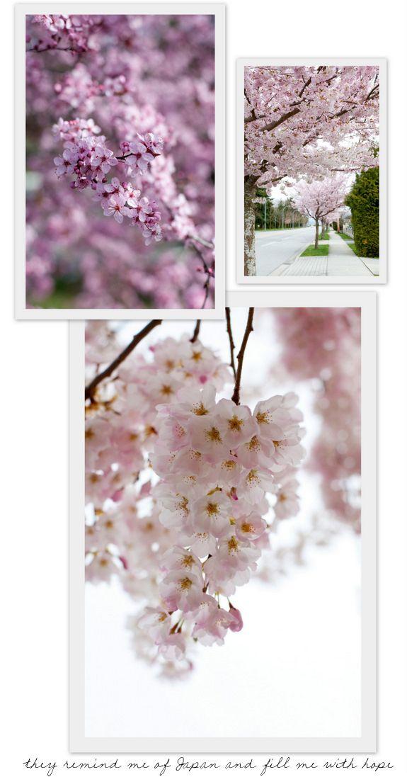 Loveliest Of Trees The Cherry Now Blossom Cherry Blossom Festival Spring Flowers