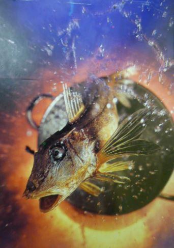 Fisch Springt Aus Der Pfanne Fische Skuril