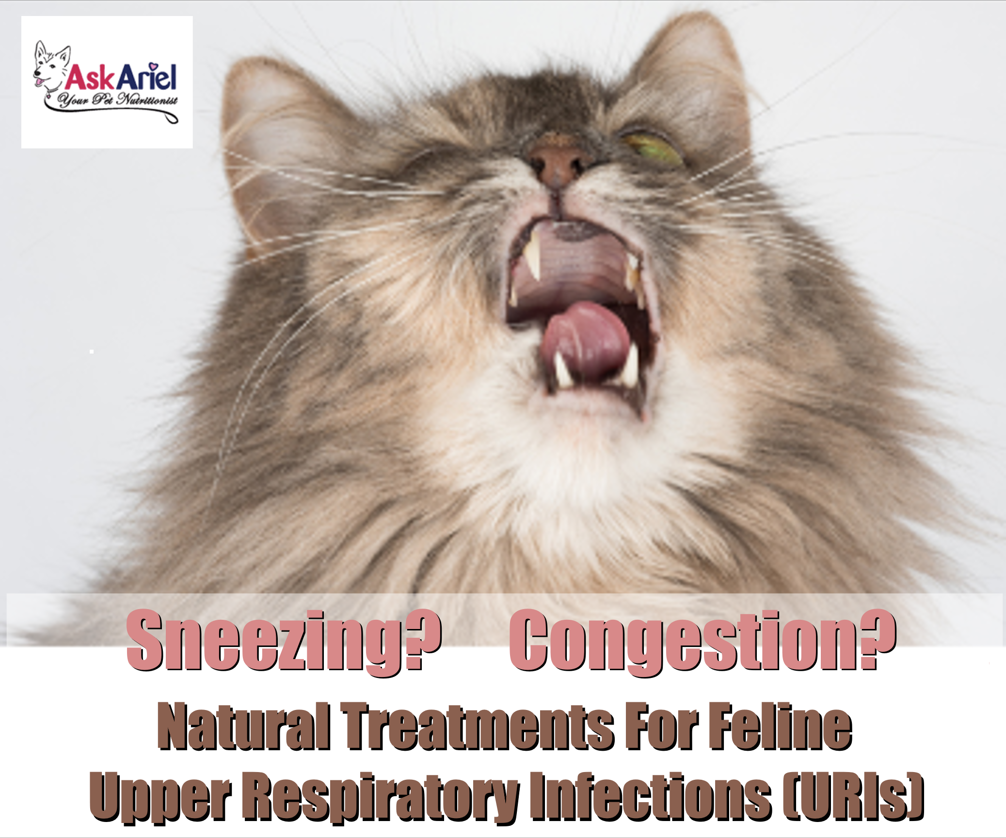 Can cats catch a cold? A feline upper respiratory