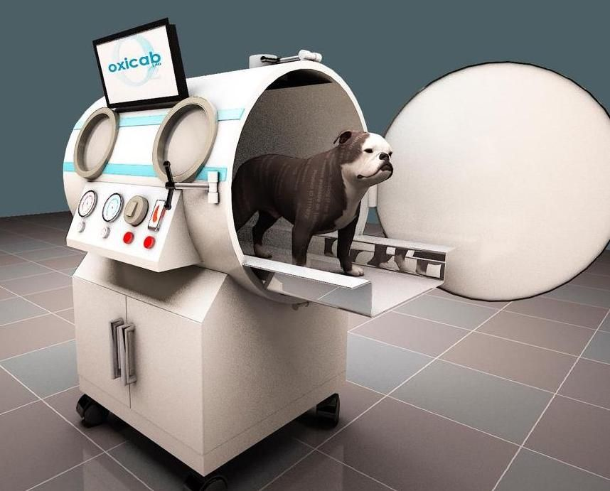 India small animal veterinary hyperbaric oxygen therapy