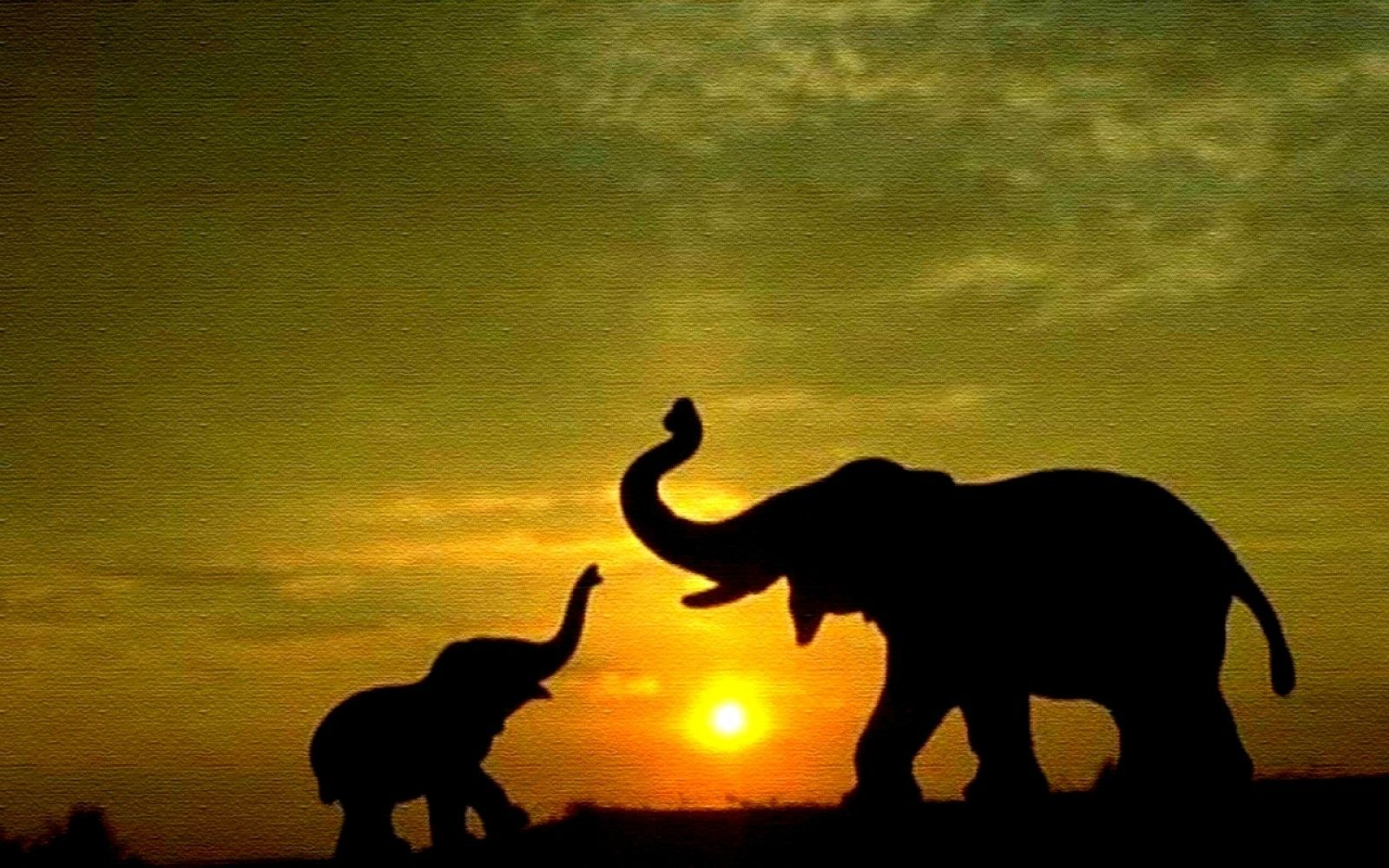Elephant Sunset Wallpaper