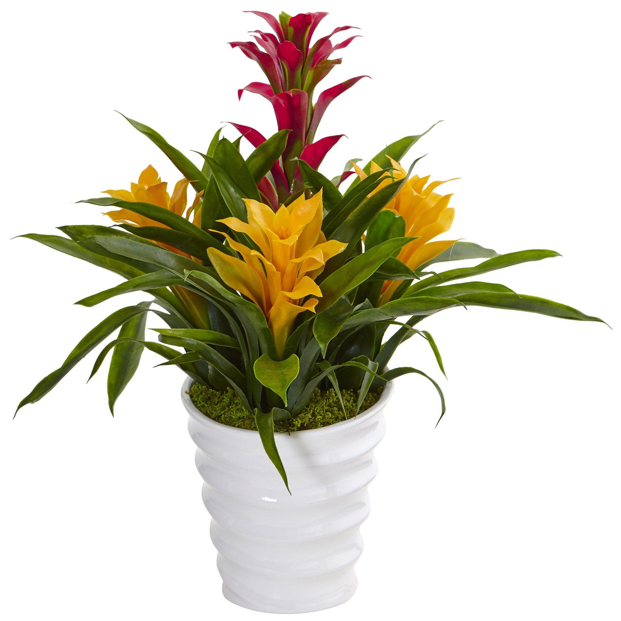 17 H Bromeliad In White Swirl Vase