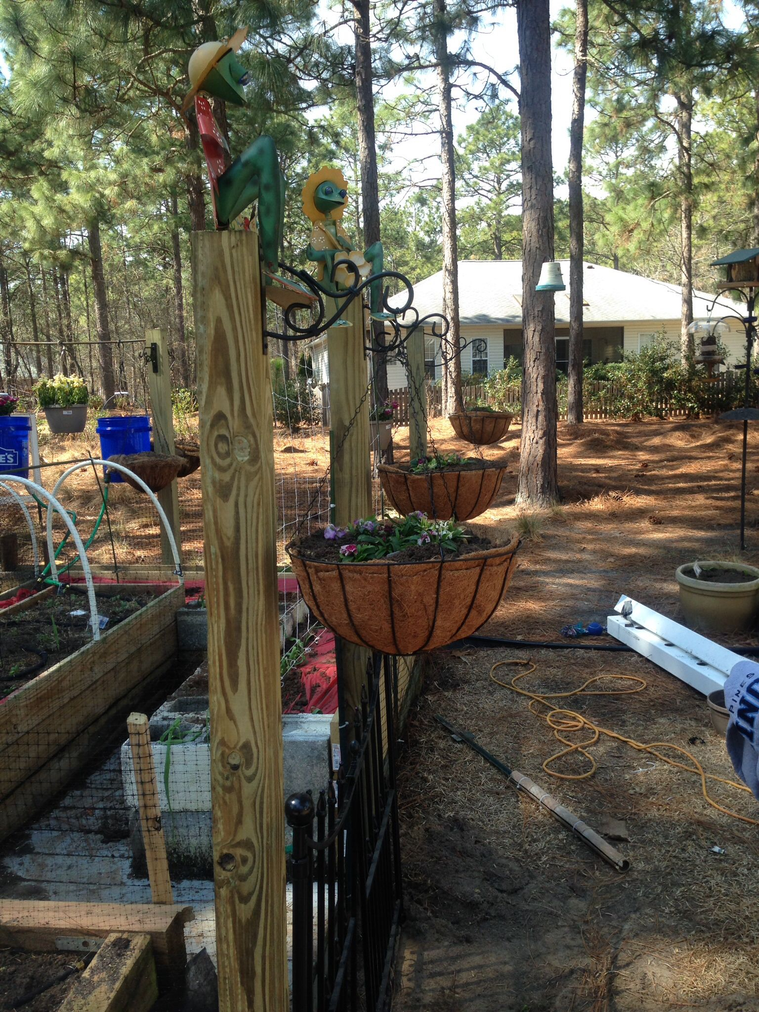Garden fenced in, bucket irrigation completed, gate installed ...