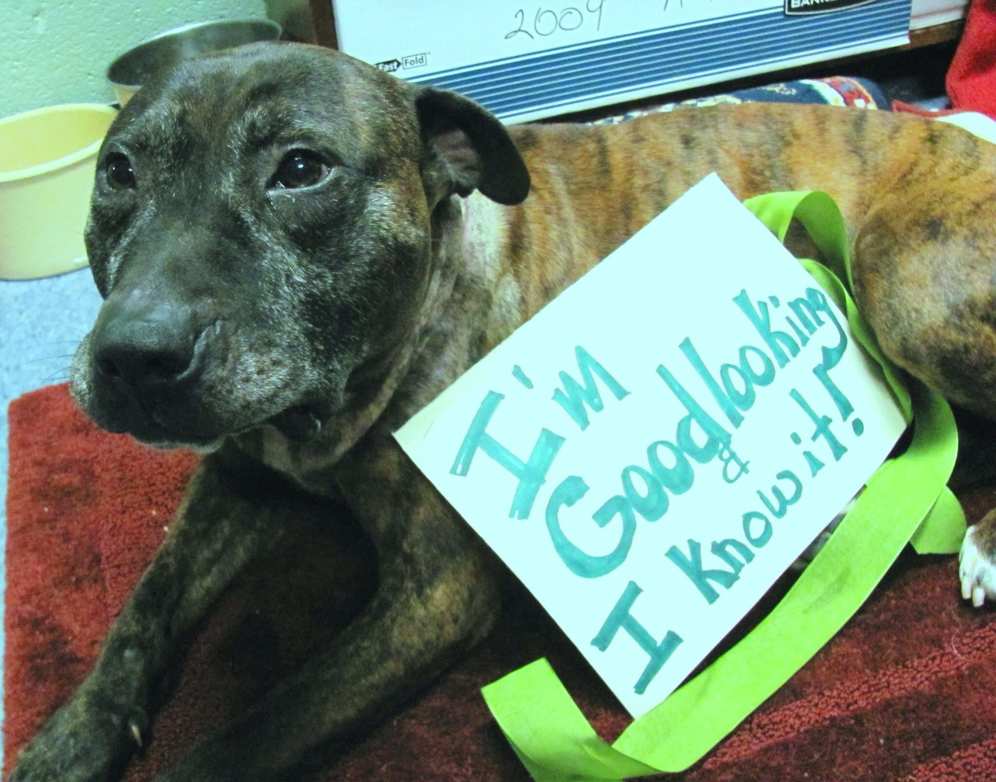 15+ Jessamine county animal shelter ideas