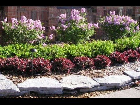 Low maintenance plants and dwarf shrubs youtube low for Low growing landscape plants