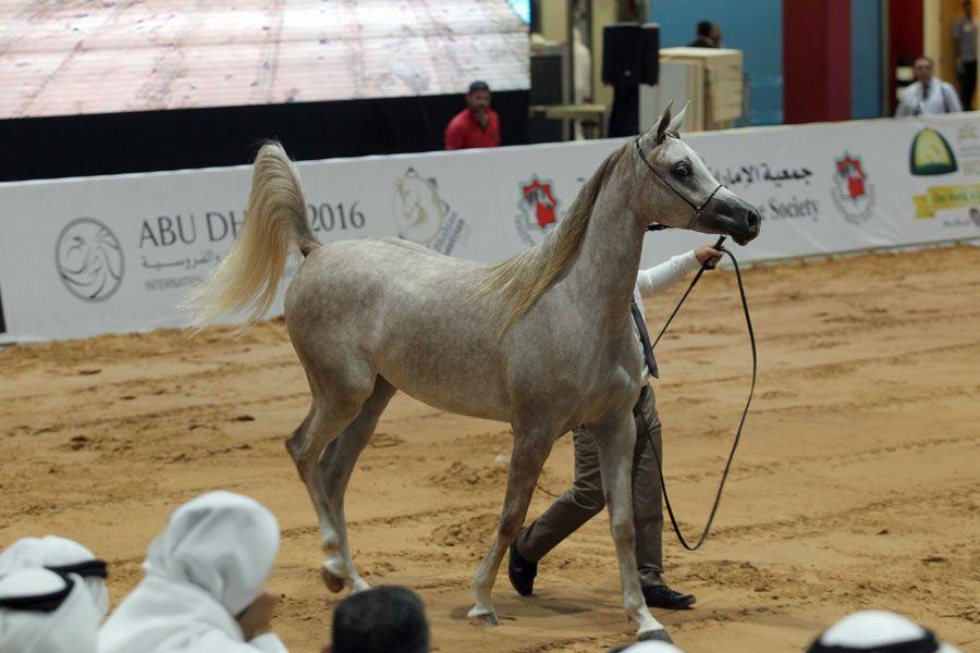 أبوظبي تنظم الدورة الأضخم في تاريخ المعرض الدولي للصيد والفروسية سبتمبر القادم Equestrian Hunting Horses