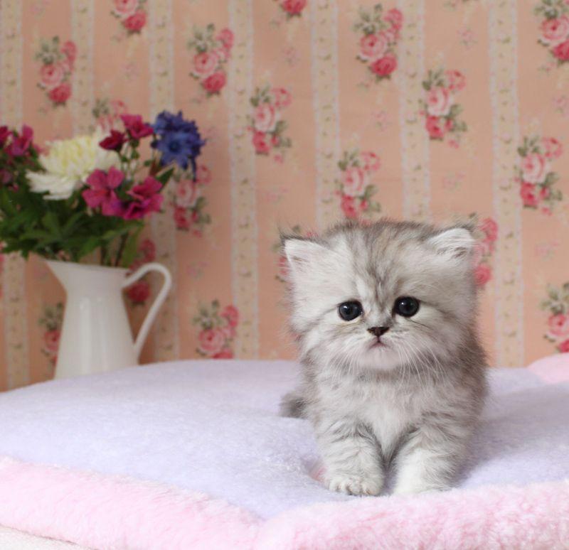 Cat Litter Pink