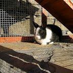 Rabbits at Casas Ordesa