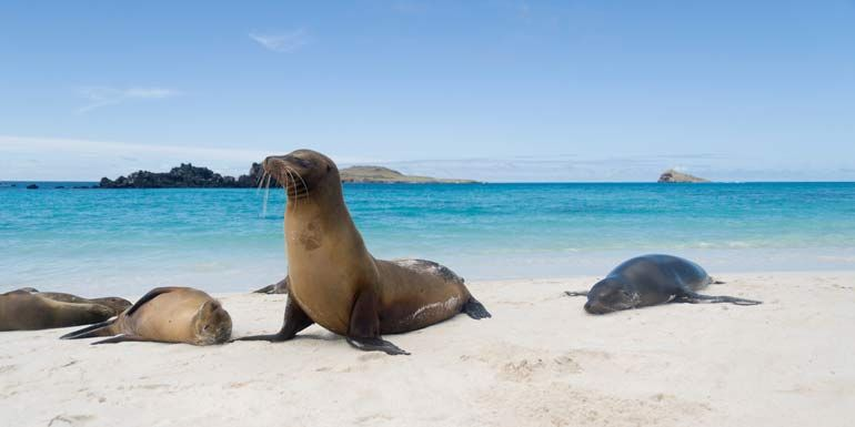 6 Great Itineraries for Animal Lovers