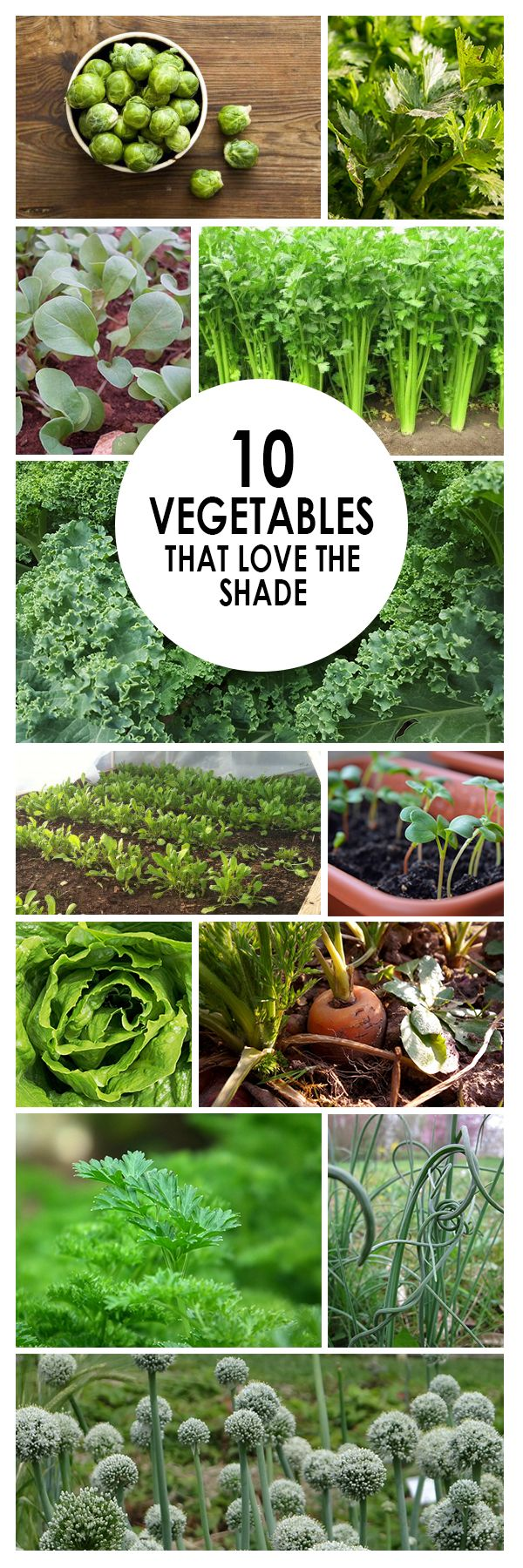 10 Vegetables That Love The Shade Gardens Vegetable 400 x 300