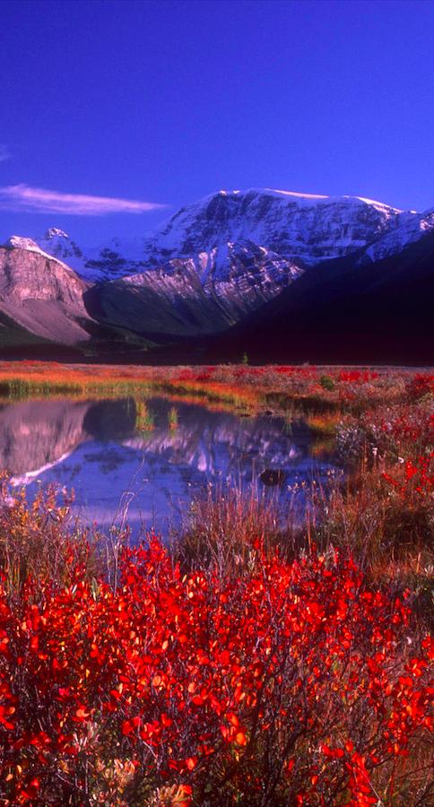 Peaceful Mountain Lake Near Sunwapta Falls In Jasper National Park Alberta Canada Photo Bilderbuc Beautiful Nature Beautiful Landscapes Nature Photography