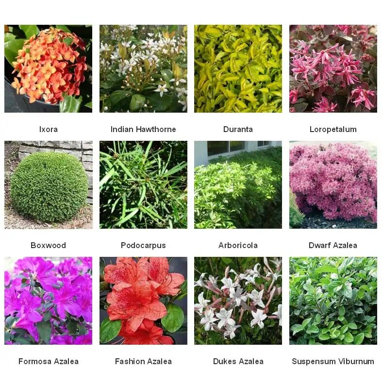 Names Of Shrubs With Pictures Mycoffeepot Org