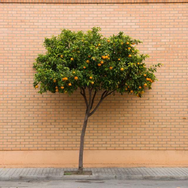 10 arbolitos para tu patio los naranjos enanos jardines for Arbustos enanos para jardin