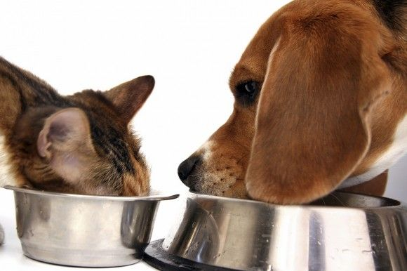 Pet Food Recall Global Animal S List Of Recalls Of Dog Jerky