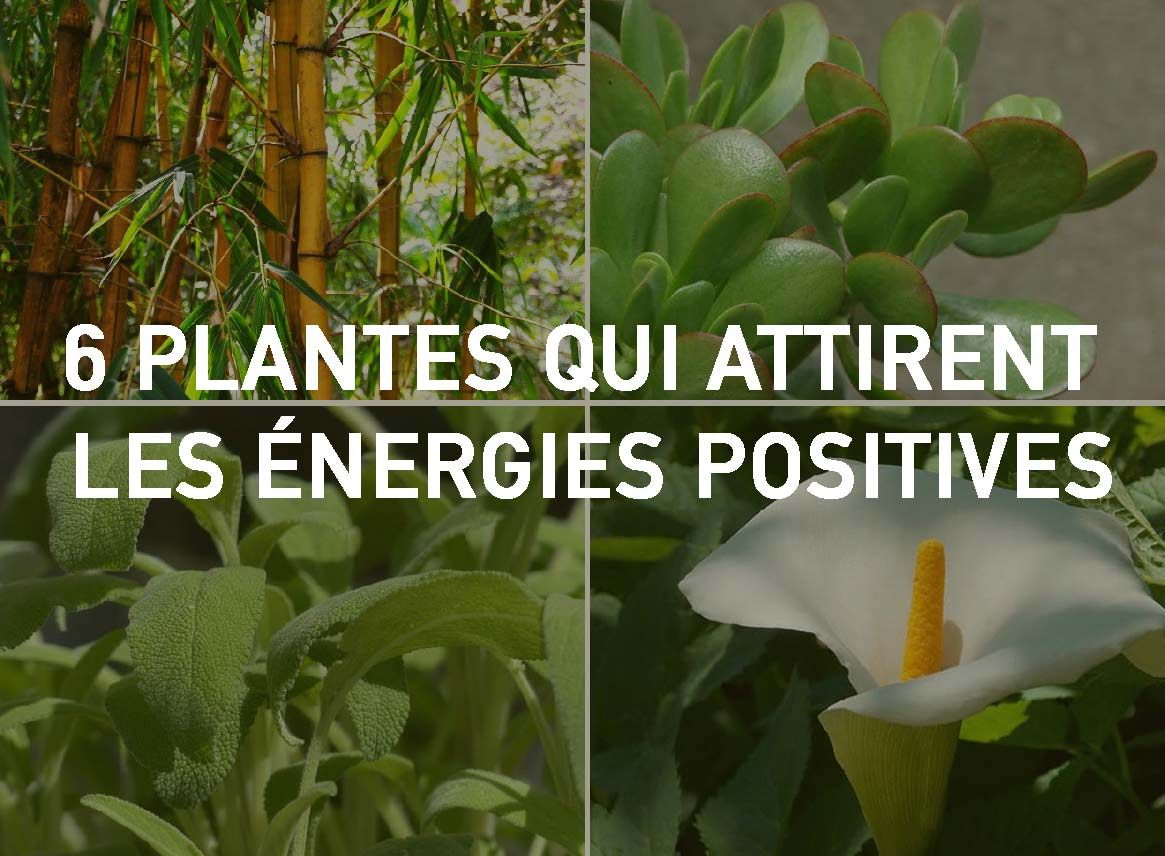 6 plantes qui attirent les nergies positives selon le for Plante feng shui
