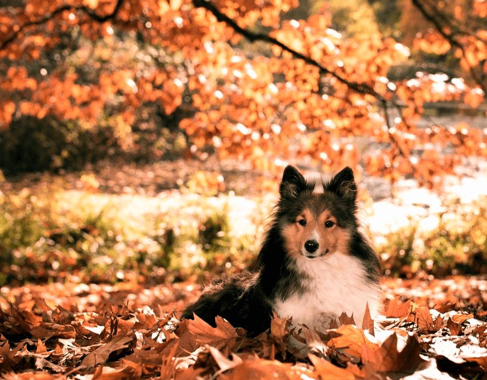 Gesunder Hund Im Herbst Sicherheit Und Sichtbarkeit Hundesport Nubi Hundetraining Gesunde Hunde Hundesport