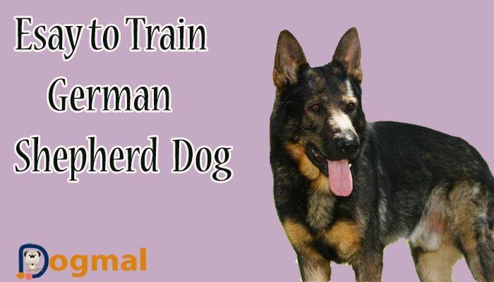 German Shepherd Dog 15 Reasons To Adopt This Dog German