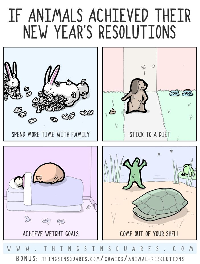 Things In Squares Animal Resolutions Bonus Poem Chuckles