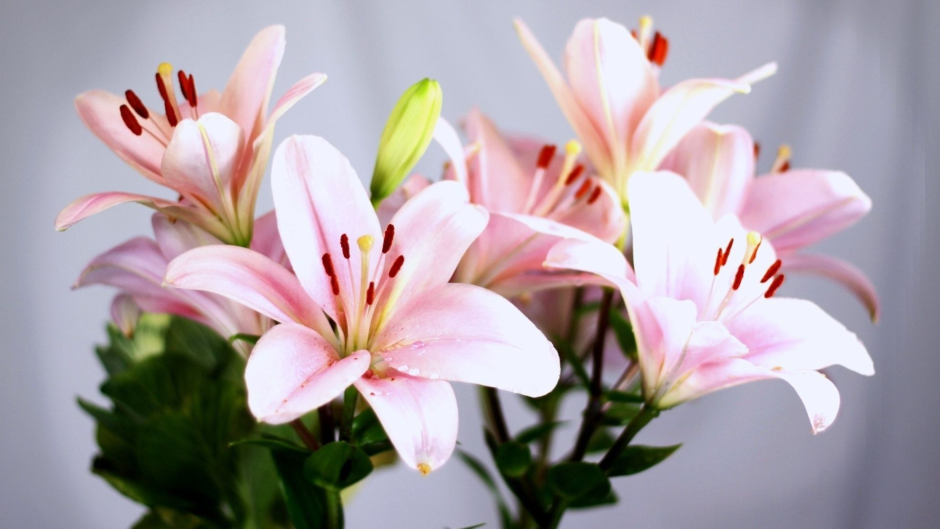 Lillies Google Search Lillies Pinterest Flowers Local