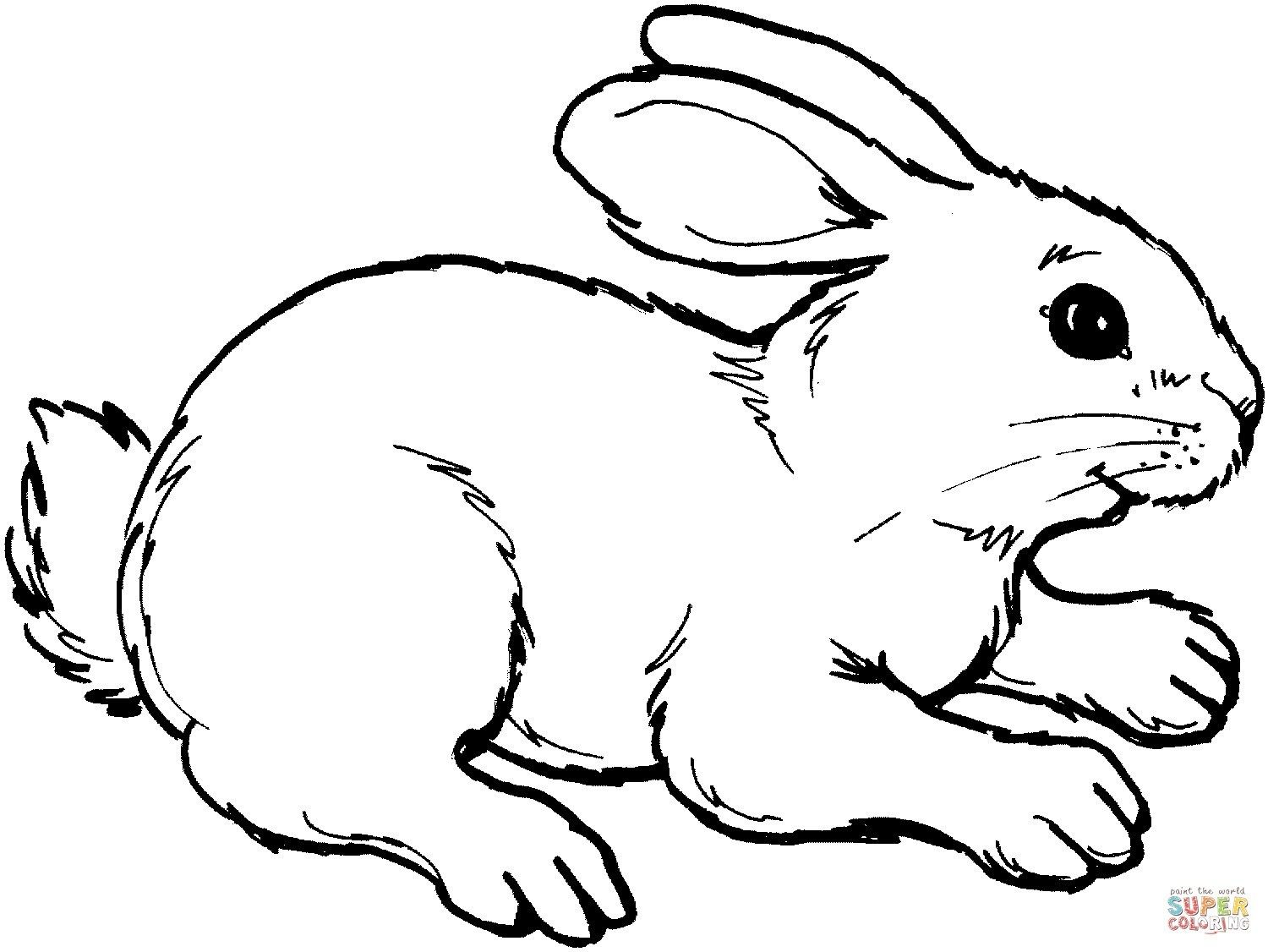 Coloring Pages Bunny Rabbit Coloring Page 04 Animals Ezentity Gt Others Free Printable Colorin Bunny Coloring Pages Rabbit Colors Coloring Pages For Kids