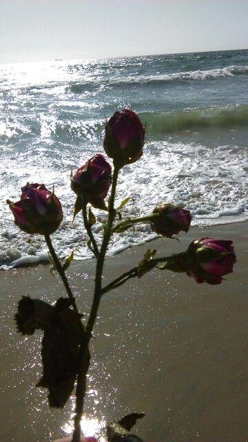 Bolsa Chica State Beach 9/22/2015