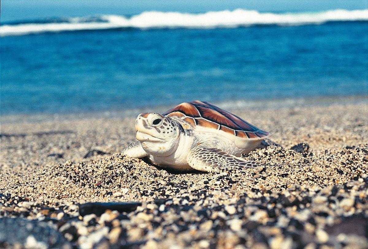 Fonds marins tortue - Serge GELABERT