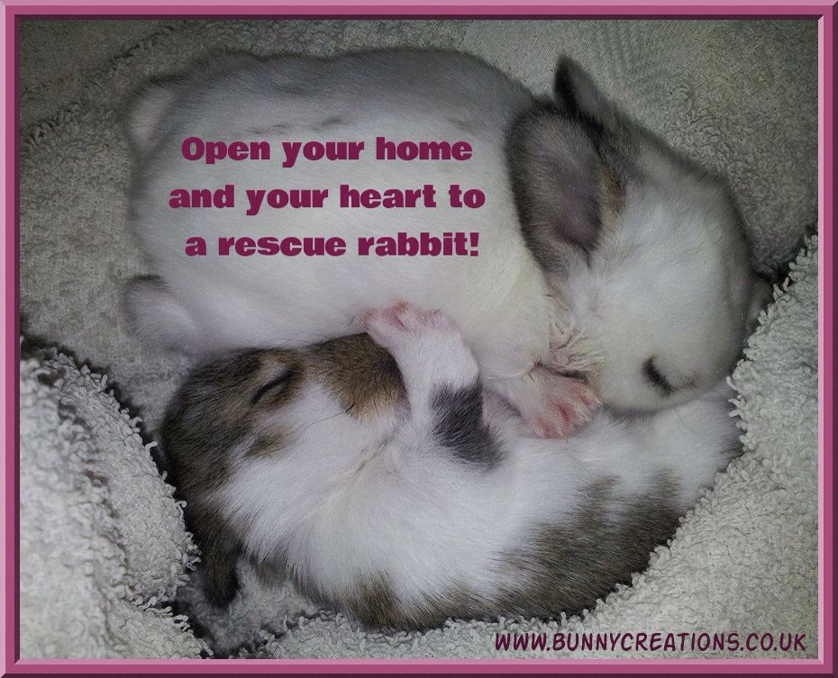 adopt dont buy!