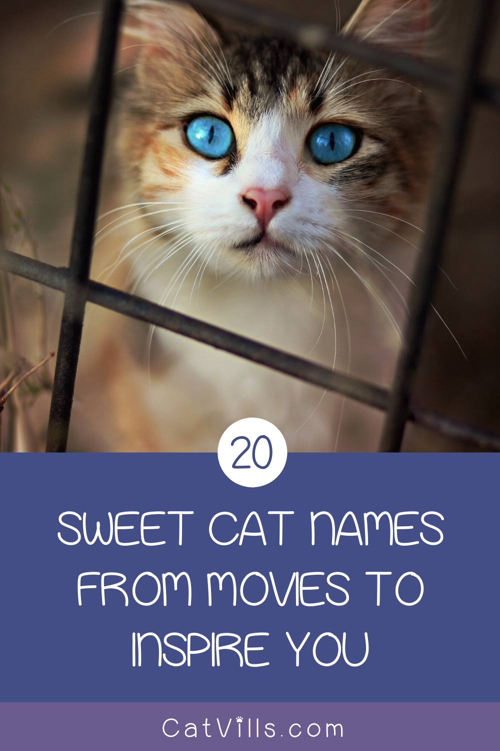 20 Sweet Cat Names From Movies To Inspire You In 2020 Cat Names Cute Cat Names Girl Cat Names