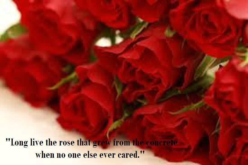 The Most Beautiful Wallpapers With Quotes Latest Most Beautiful Red Rose Pictures With Romant Red Rose Pictures Rose Flower Wallpaper Beautiful Red Roses