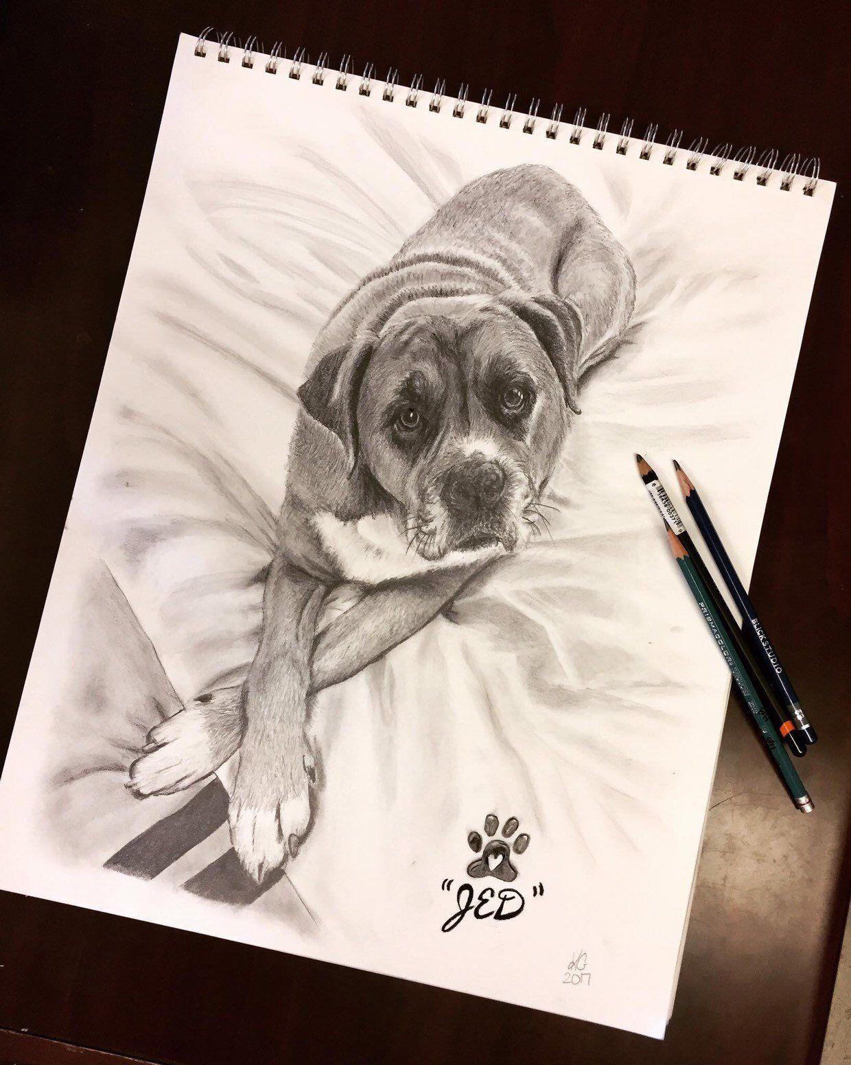 Custom Pet Portraits In Charcoal