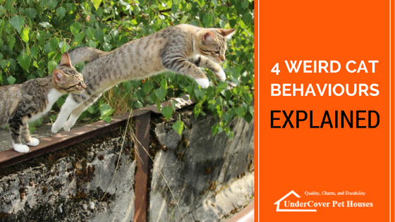 4 Weird Cat Behaviours Explained | Cat behavior, Crazy ...