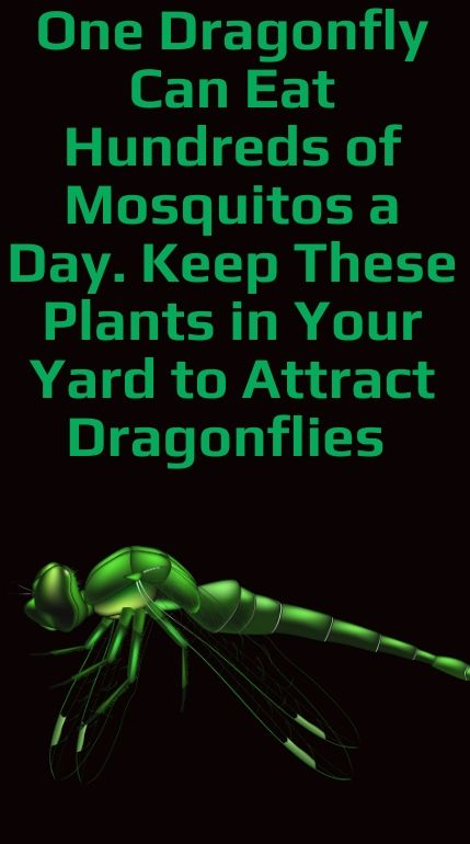 One Dragonfly Can Eat Hundreds of Mosquitos a Day. Keep These Plants in Your Yard to Attract Dragon.