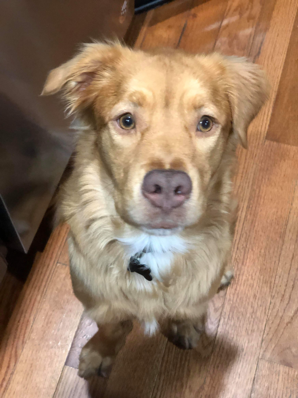Adopt Melanie on Petfinder Dog adoption, Labrador