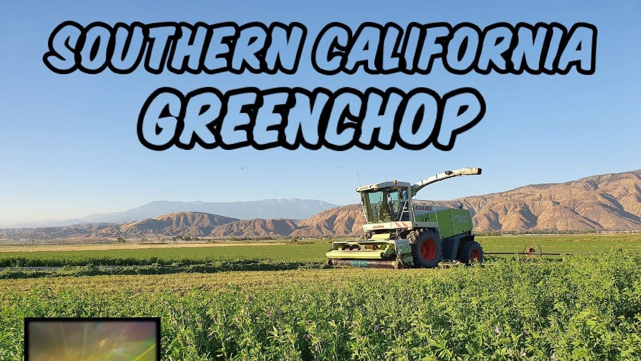 , Green Chopping Alfalfa in Southern California | August 2020, My Travels Blog 2020, My Travels Blog 2020