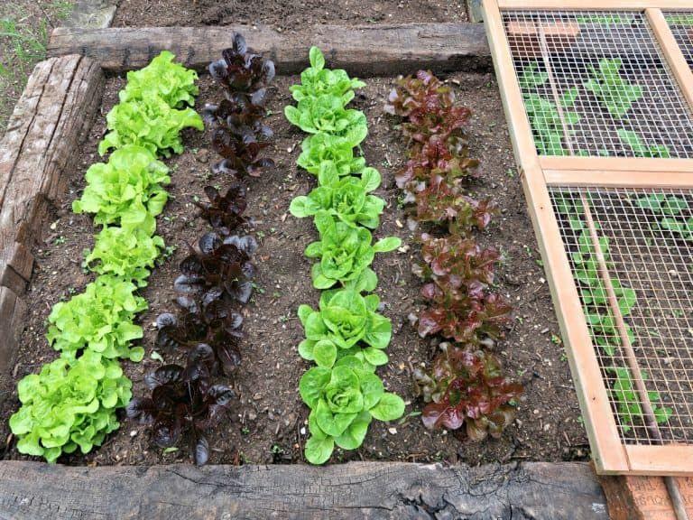 DIY Wormery How To Make A Worm Compost Bin Worm