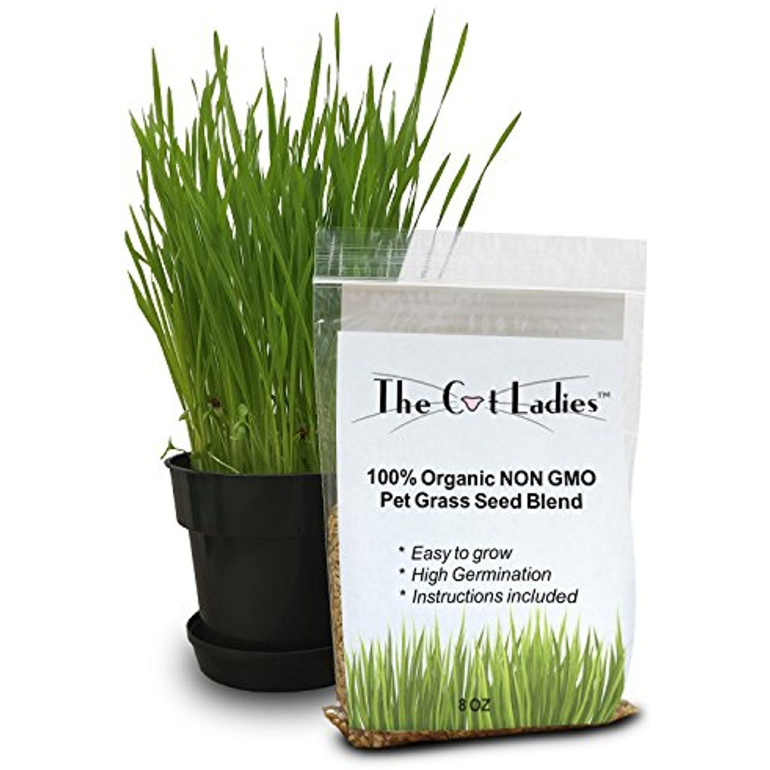 100 Organic Cat Grass Seed (NON GMO) >>> You can find