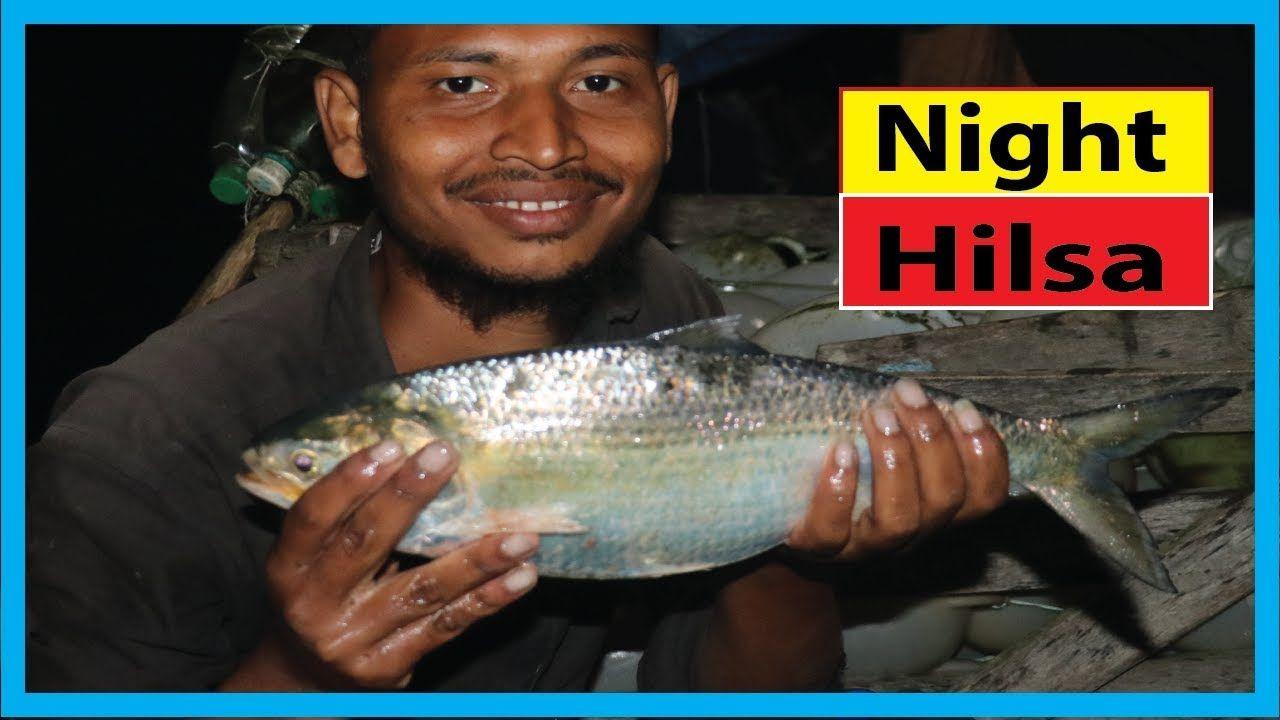 Night Fishing For Live Hilsa Fish Night Fishing Near Me For Ilish Fish Night Fishing Fishing Australia Tackle Box