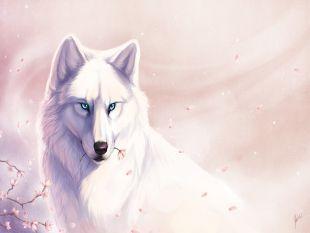 Imagenes Fonditos Loba Blanca 2d Animales Arte De