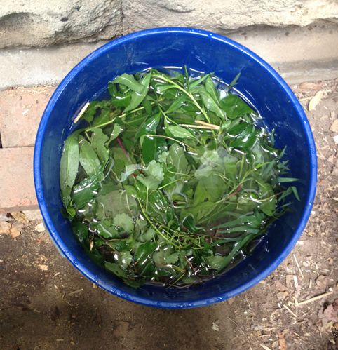 Are You Still Buying Fertilizer Make Your Own For Free Diy Fertilizer Garden Fertilizer Fertilizer For Plants