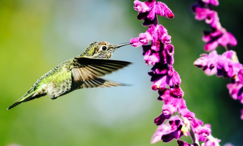 8 Spiritual Messages Hummingbirds Are Trying To Send You | Healing