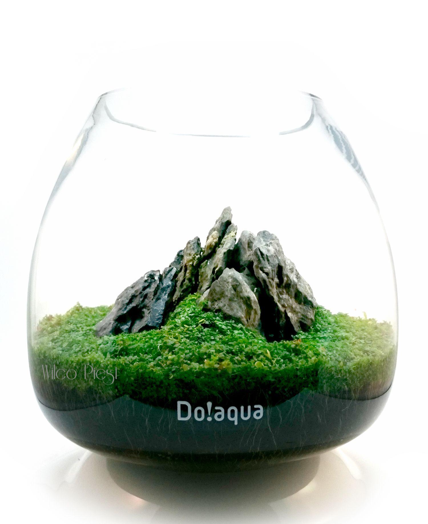 Aquascapingforum terrarium pinterest ogrody minis