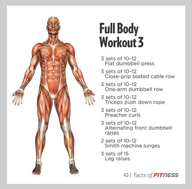 Facts Of Fitness Full Body Workout Fitness Body Total Body Workout