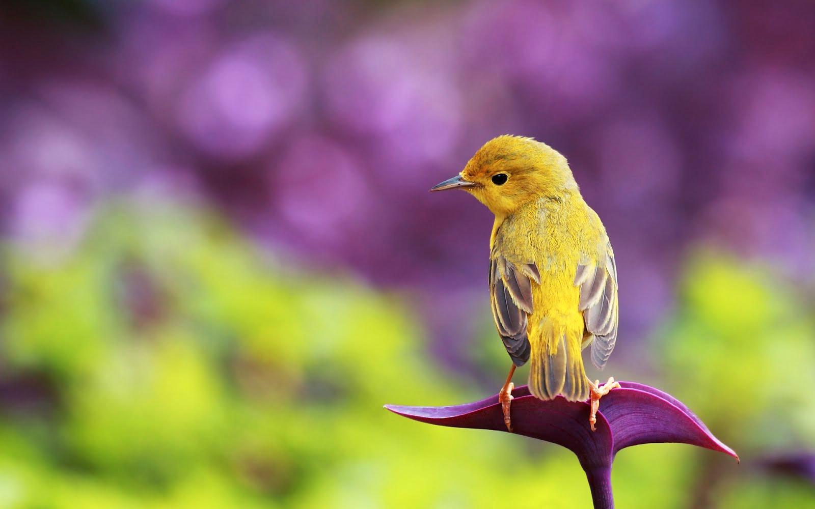 Fondos de pájaros