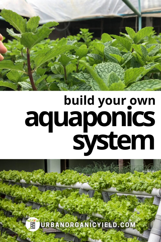 Build A Cheap DIY Backyard Aquaponics System