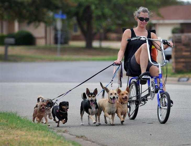Walking The Dogs While On A Bike Dog Walking Dogs Funny Animal Photos