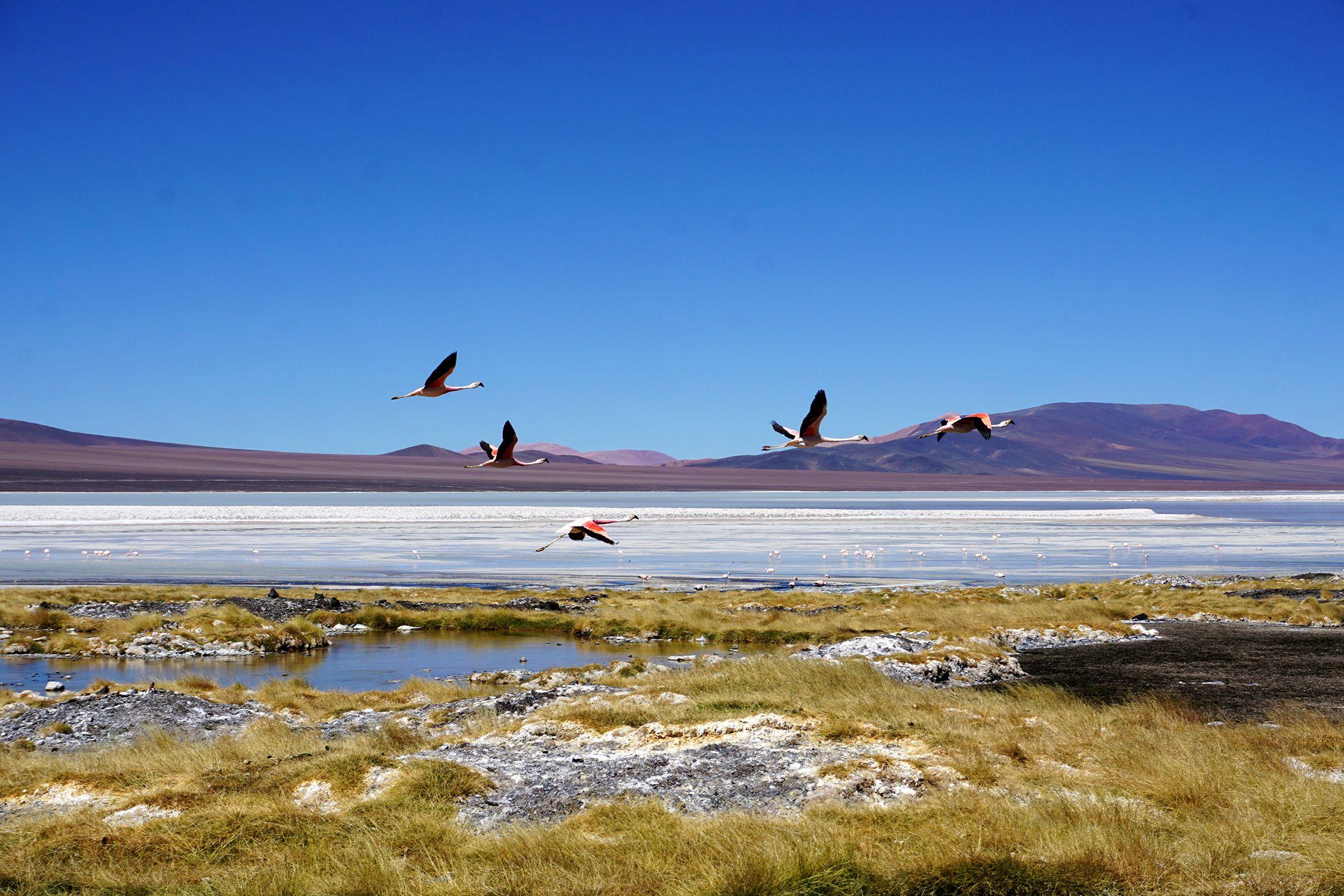Argentinien Reise Laguna Brava Mit Flamingos La Rioja Villa Union Argentinien Norden Reisen Reiseziele Argentinien