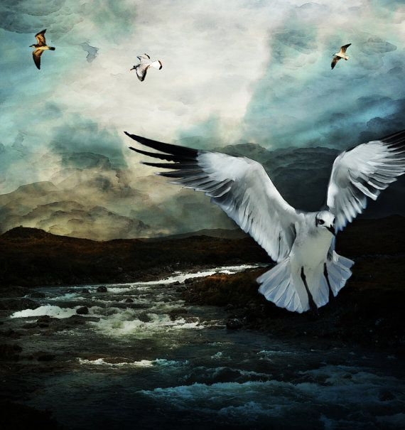 Seagull flying by PattiCakesDesign on Etsy, $25.00